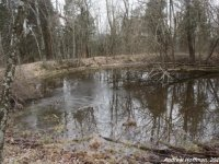 Vernal pool from Switzerland County