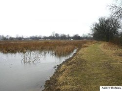 Breeding marsh from Wayne County