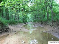 Bottomland creek from Dubois County