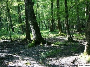 Bottomland forest from Posey County