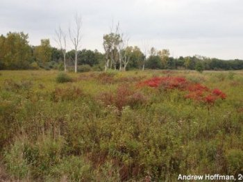 Shrubby Meadow from Lake County